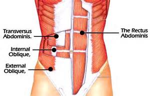 the core muscles